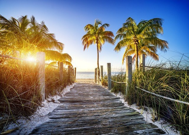 sky tree palm Nature shore Beach palm family plant Sea Ocean sunlight morning grass arecales woody plant Coast tropics Sunset walkway lined surrounded sandy