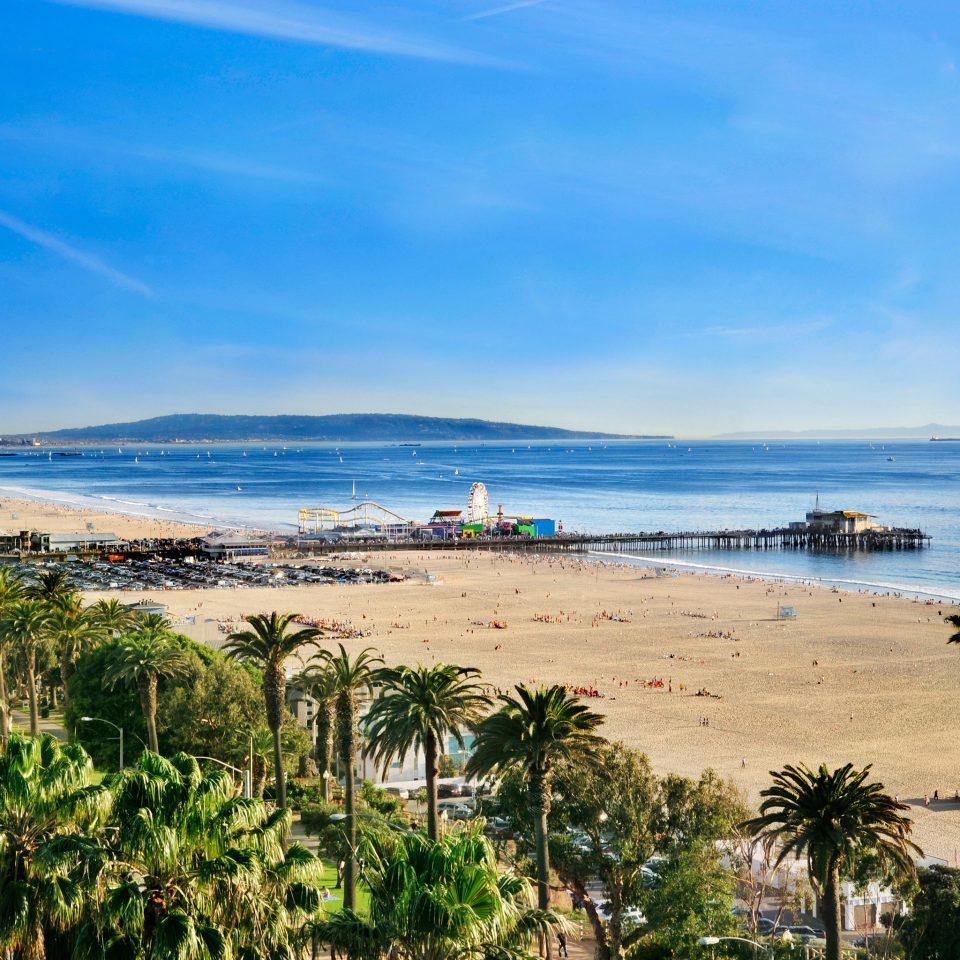 Beach Ocean sky shore Sea Coast horizon palm plant Nature cape tree arecales sand sandy day