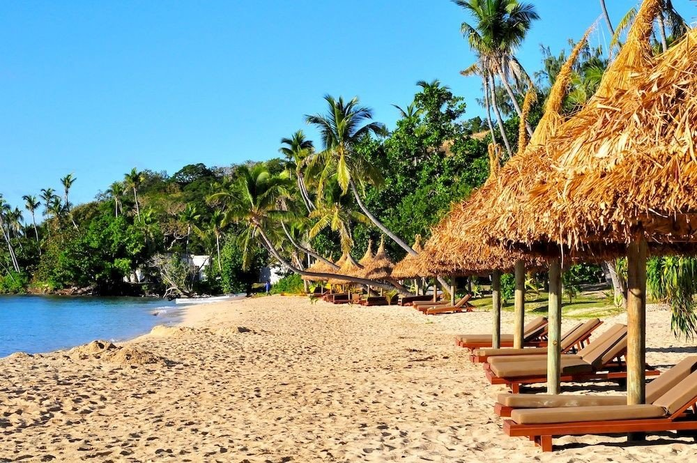 tree sky Beach water ground umbrella palm Nature Resort arecales Coast tropics Sea caribbean lined shore sandy