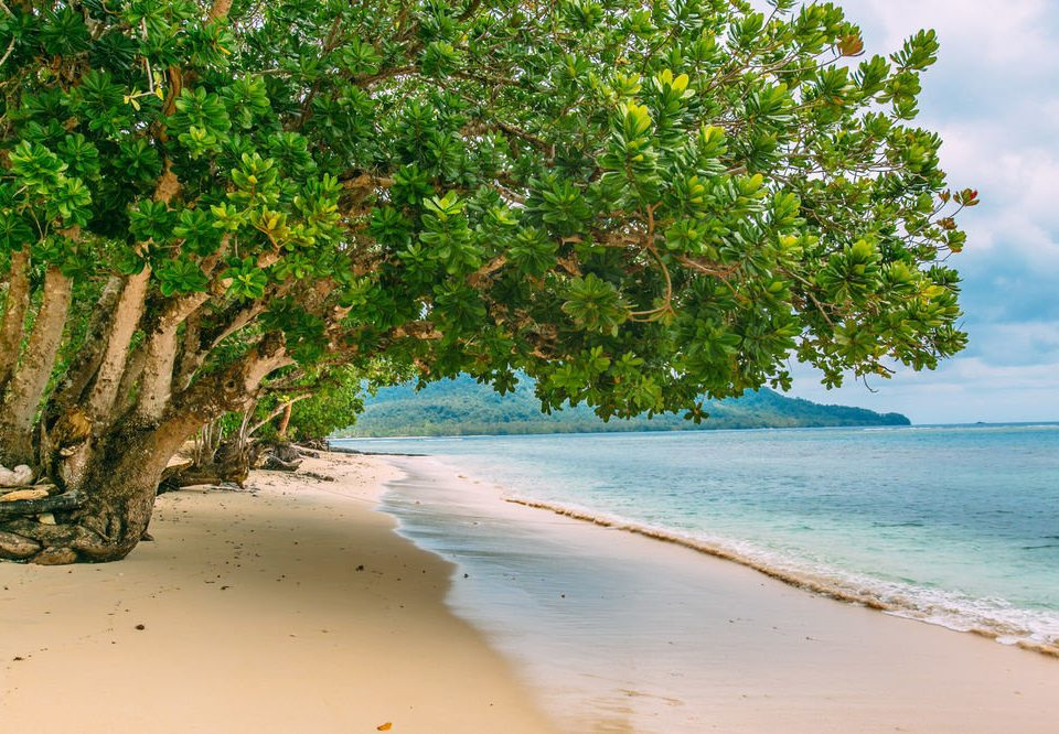 water tree Beach Nature shore woody plant Sea sunlight tropics arecales Coast sandy