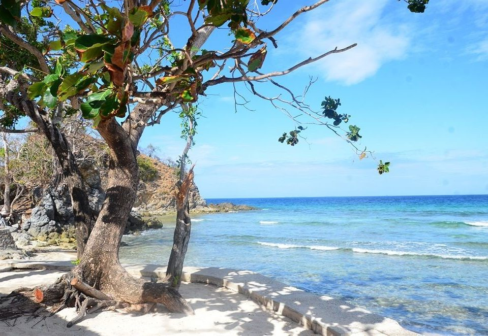 tree sky water Nature Beach plant Coast Sea arecales caribbean shore