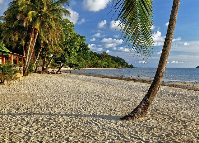 tree sky Beach ground palm water shore walkway Sea Coast sandy arecales plant sand Nature palm family tropics lined shade day