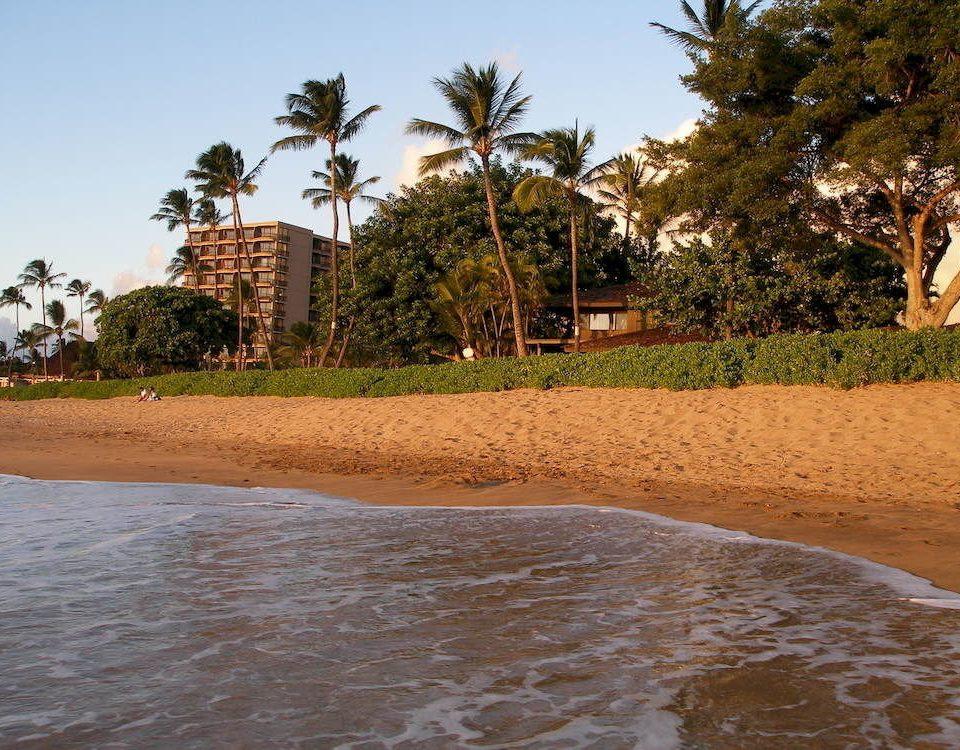 tree sky Beach shore water Sea Coast arecales soil Nature walkway sandy