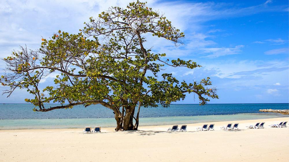 sky tree water Beach shore Nature woody plant arecales Sea Coast sandy
