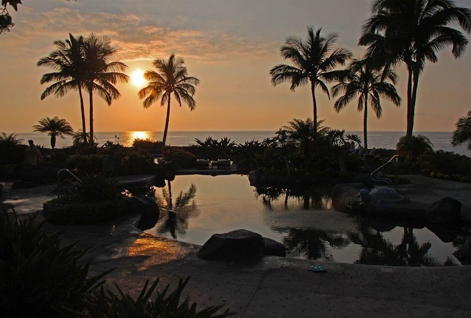 Pool Resort tree palm Beach Sunset Sun Ocean arecales morning evening dusk Sea sunrise Coast palm family dawn tropics setting plant sandy shade shore lined