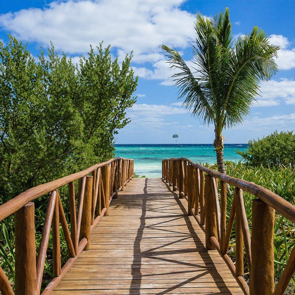 tree sky water arecales boardwalk palm tree tropics plant Sea walkway Resort Ocean wooden leisure Coast Beach Pool palm sandy