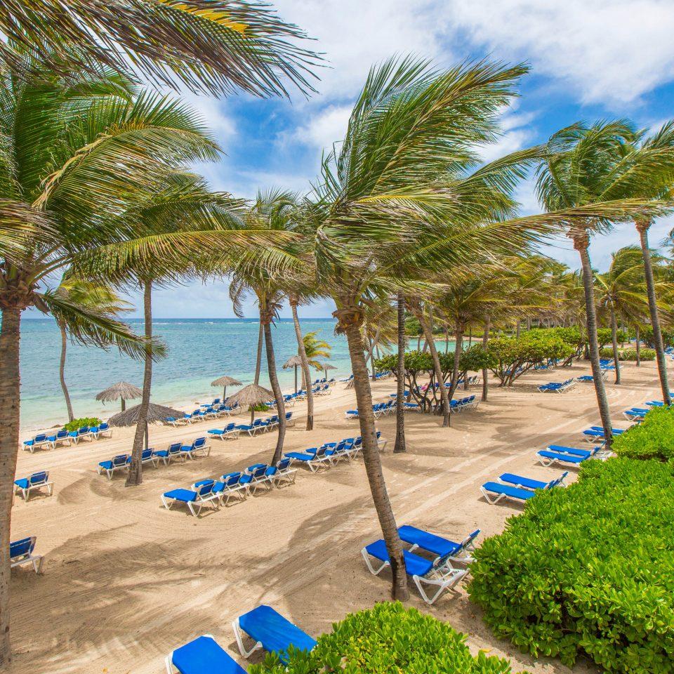 tree umbrella Beach palm water lawn walkway Resort caribbean arecales Coast Ocean palm family plant lined tropics Sea Pool shore shade sandy day