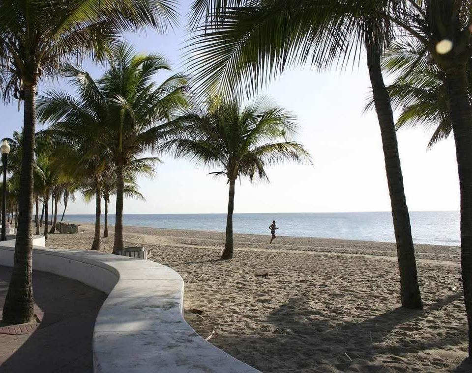 tree Beach palm sky ground water plant Ocean Sea walkway shore arecales palm family Coast Resort tropics sandy lined caribbean shade