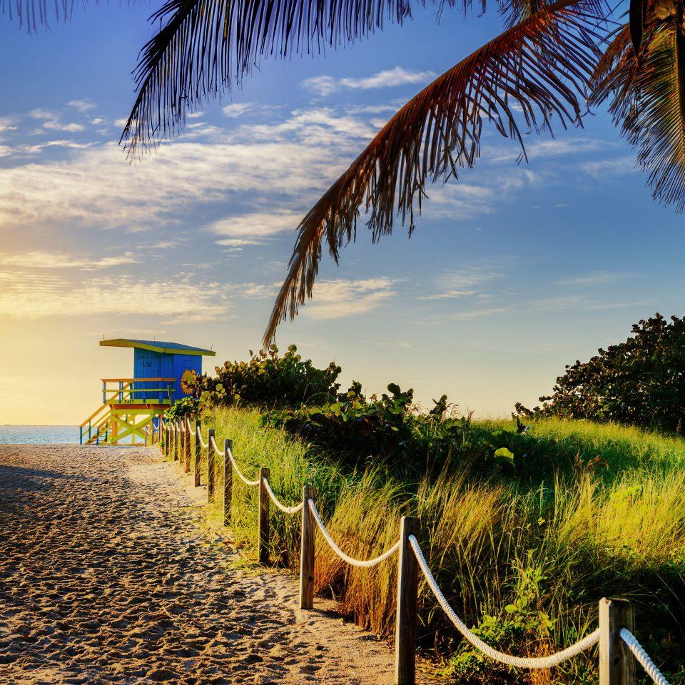 sky tree palm Beach Ocean Sea plant Coast arecales shore tropics sunlight palm family caribbean Sunset Resort lined sandy line
