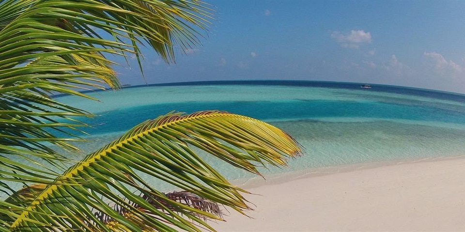 water tree Beach plant umbrella palm Ocean Sea arecales tropics caribbean Coast palm family sand wave lined shore sandy
