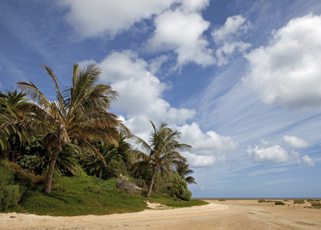 sky habitat Beach Coast tree natural environment Sea shore Ocean cloud arecales plant landscape sand cape tropics palm family palm sandy day