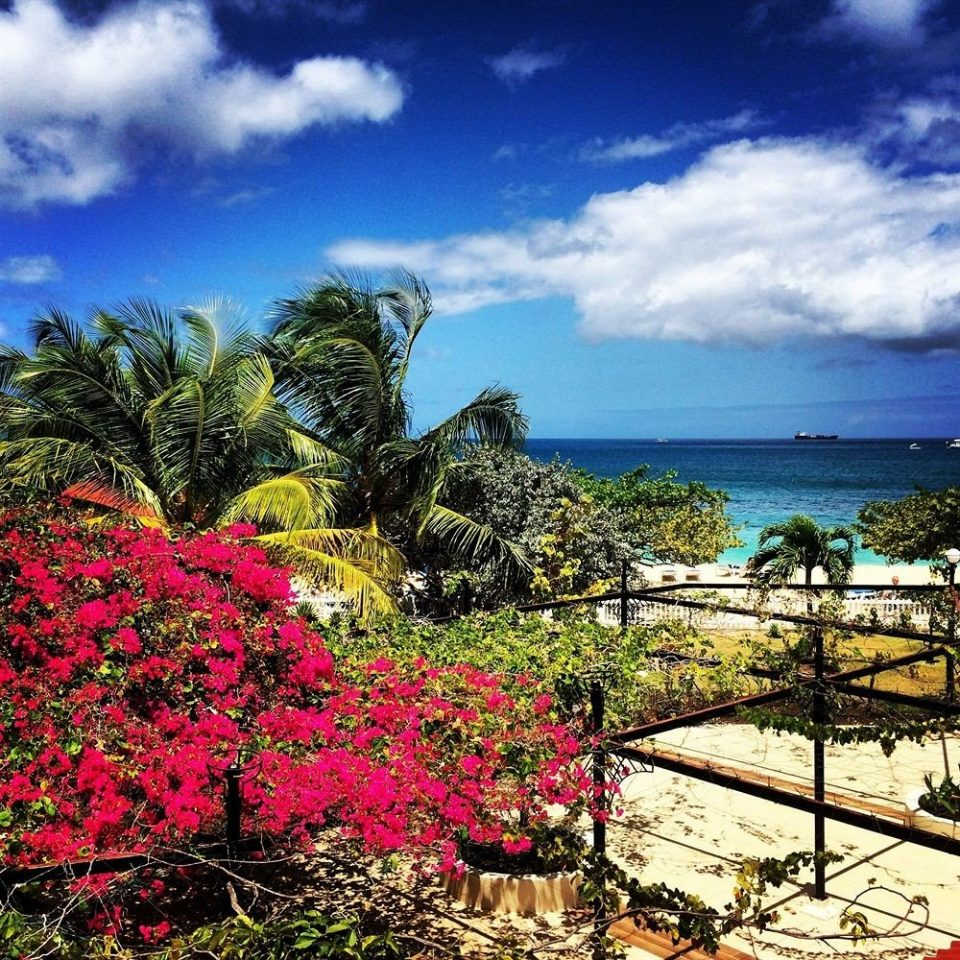 sky tree Coast flower Sea Ocean caribbean tropics arecales landscape Beach colorful
