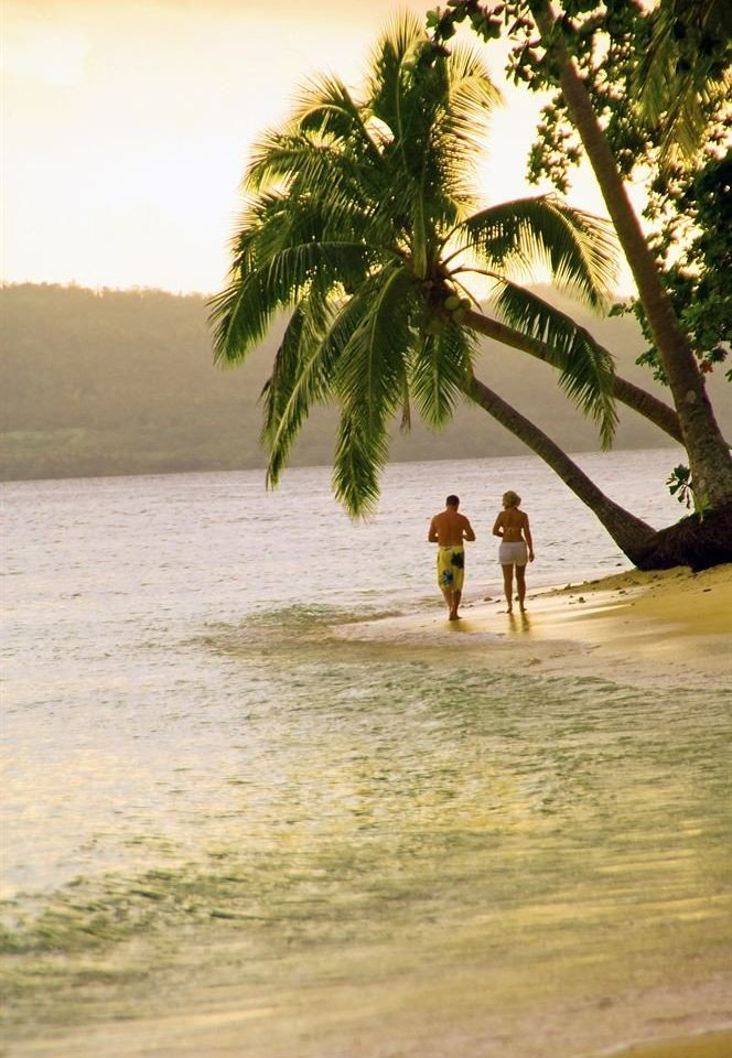 water tree Beach plant Sea shore Ocean arecales palm morning Coast sunlight tropics sand palm family
