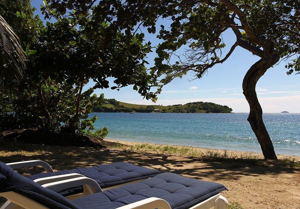tree water sky Beach shore Sea Coast Ocean overlooking arecales tropics shade