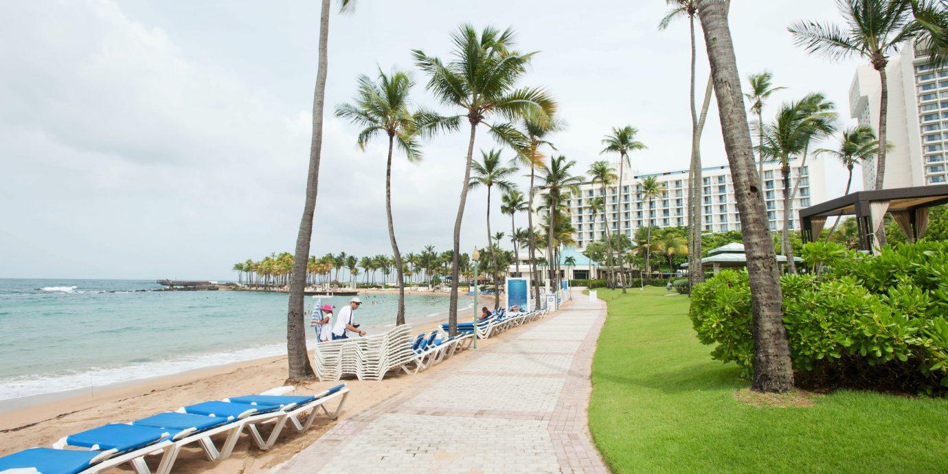 sky tree ground walkway Beach Resort boardwalk arecales palm Coast caribbean plant Sea shore lined