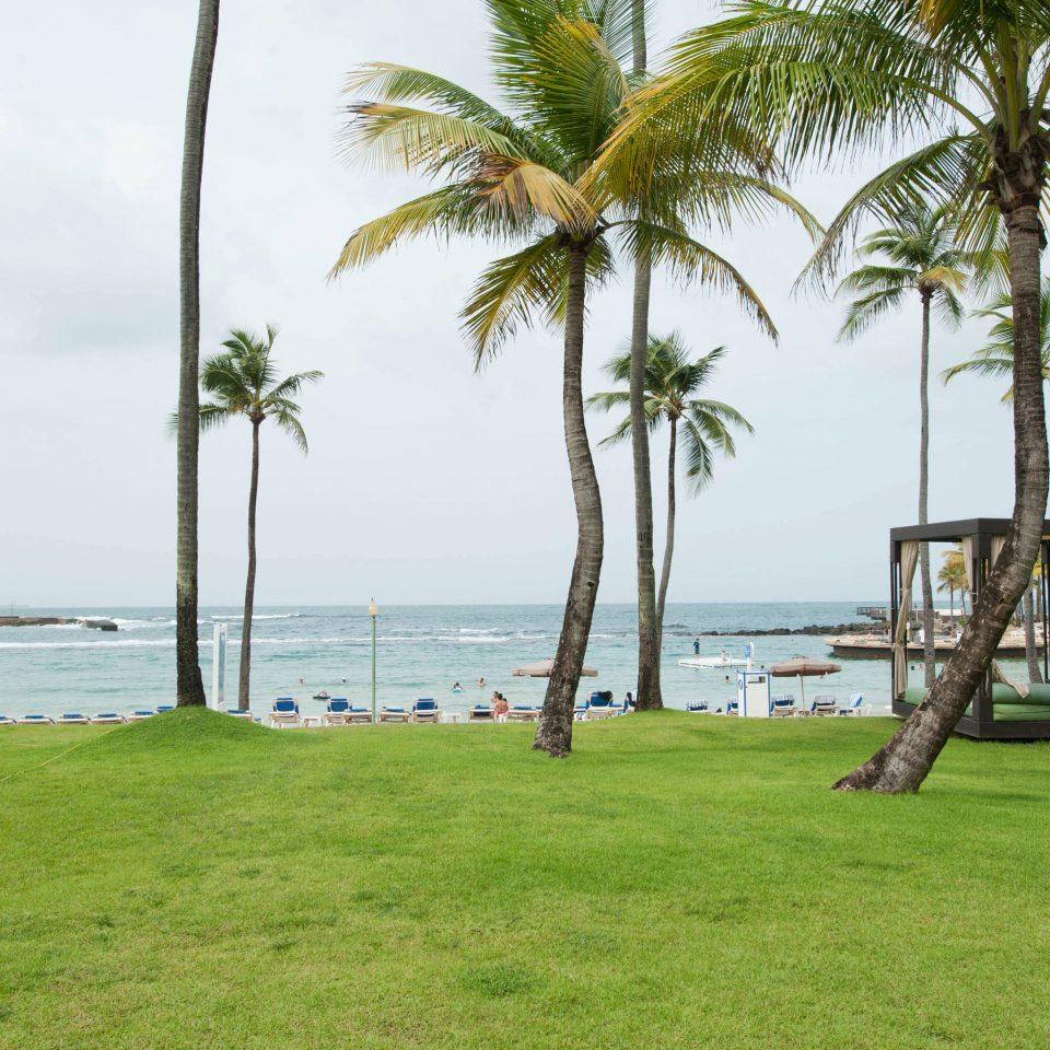 grass tree sky palm plant Beach green palm family arecales Resort caribbean walkway Sea tropics Coast shore shade lush