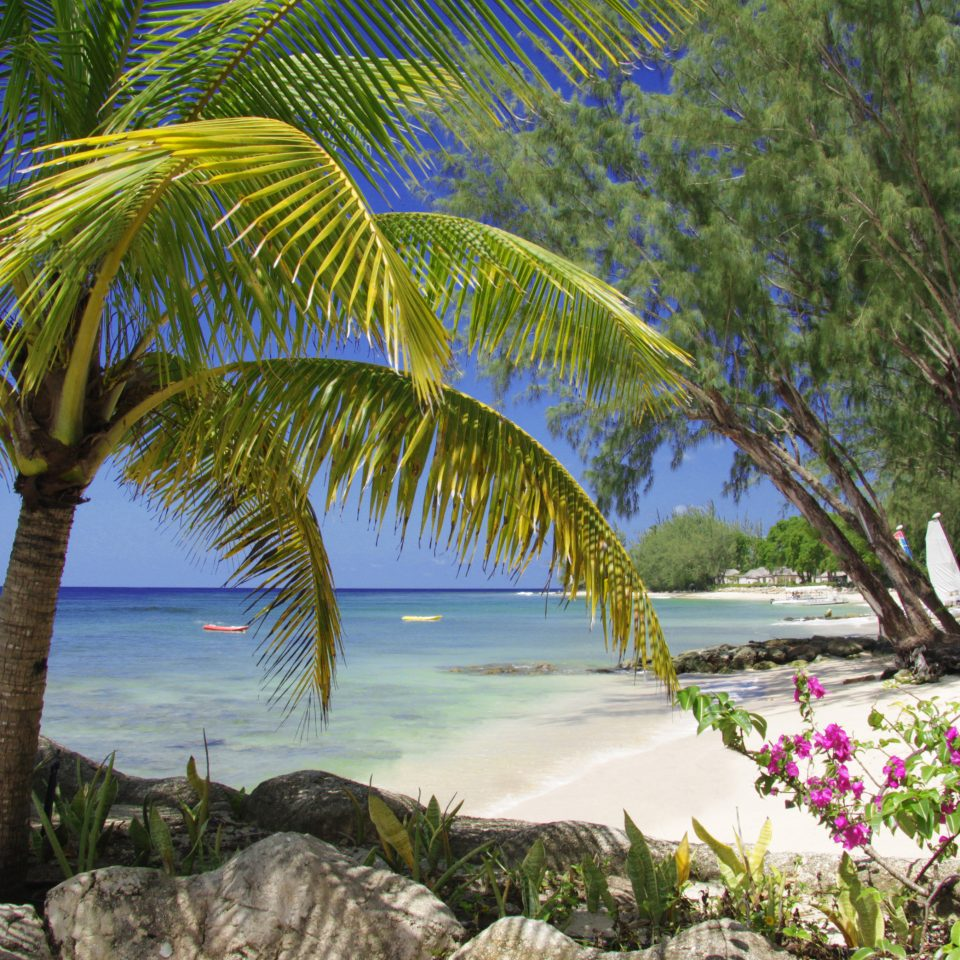tree water plant Beach flora botany tropics palm family palm caribbean arecales woody plant Coast Sea Resort flower