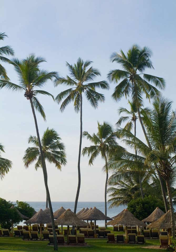 tree palm sky plant grass Beach palm family borassus flabellifer arecales Resort woody plant tropics caribbean Coast Sea flower lined