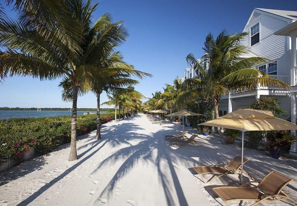 tree sky Beach Resort walkway residential area arecales Coast Sea home boardwalk lined palm empty