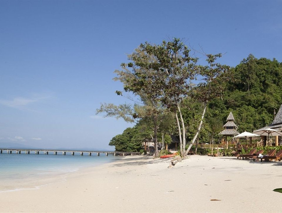 sky Beach shore tree Sea Coast arecales walkway cape day sandy