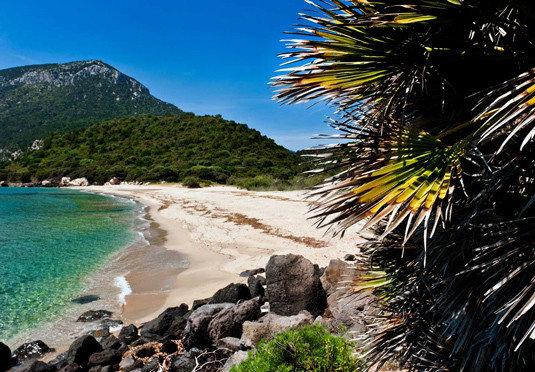 sky water Beach tree Coast rock mountain arecales Sea plant tropics sandy