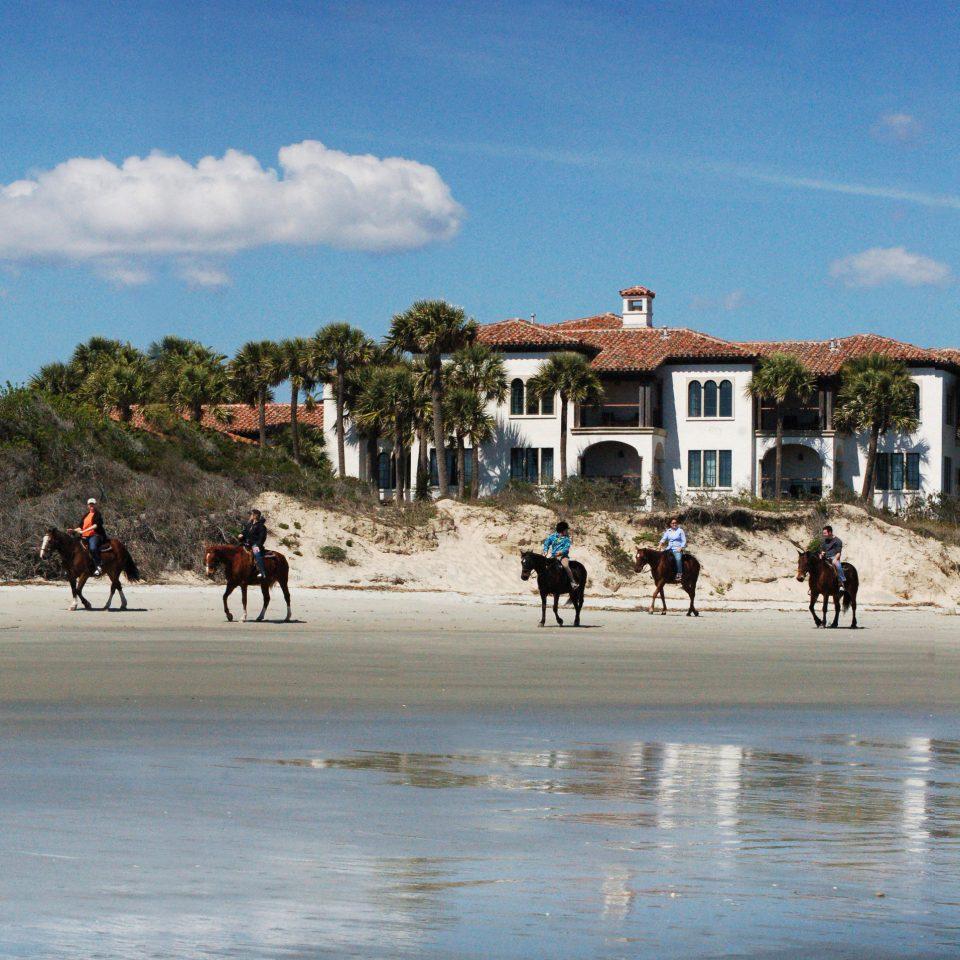 sky Beach shore Coast Sea sand water tree recreation landscape sandy