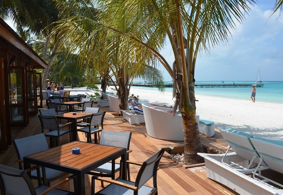 tree chair leisure Resort caribbean restaurant Beach Sea shore Deck