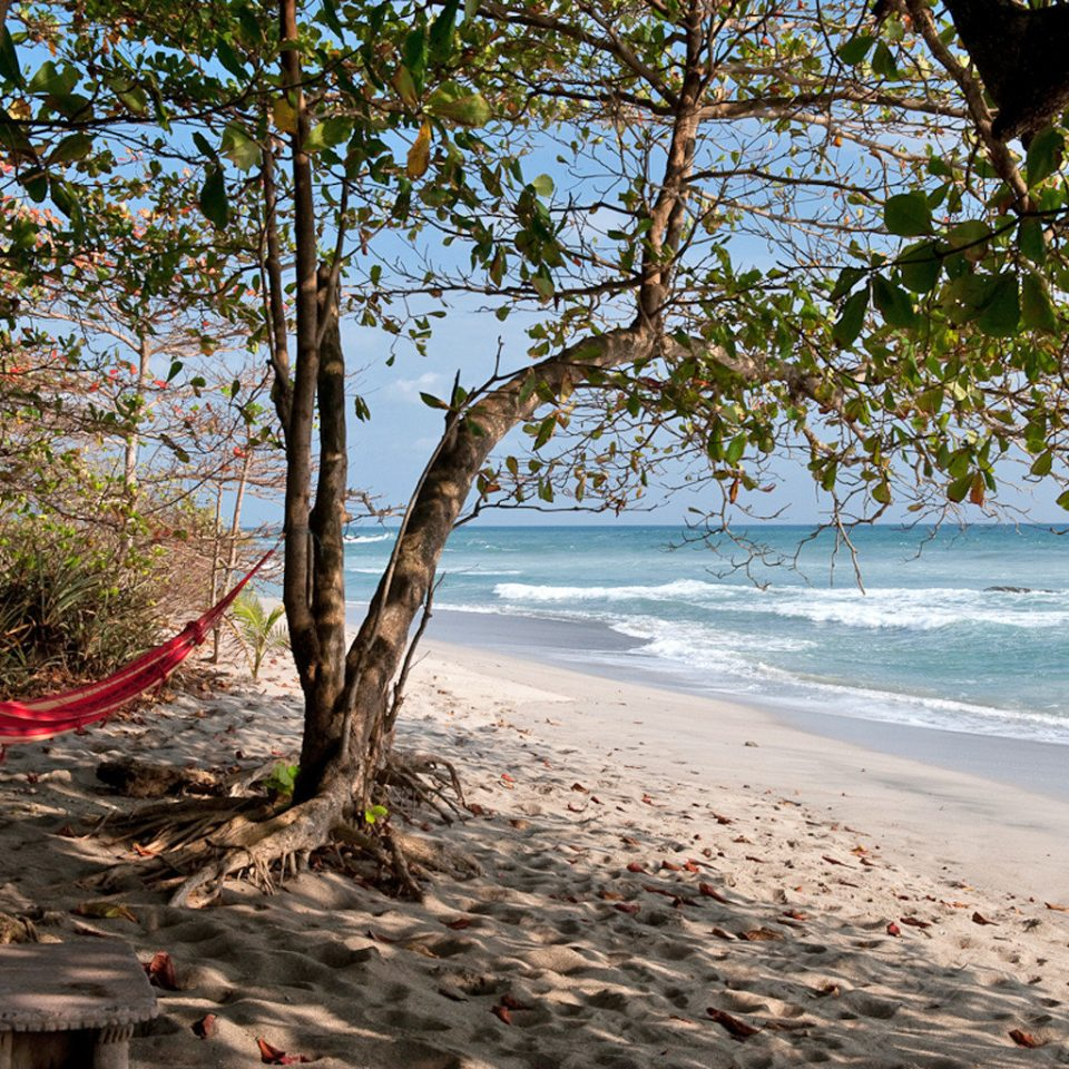 Beach Eco Grounds Jungle Outdoor Activities Romantic Rustic Scenic views tree habitat Nature water natural environment season leaf woody plant sunlight plant Sea autumn shore