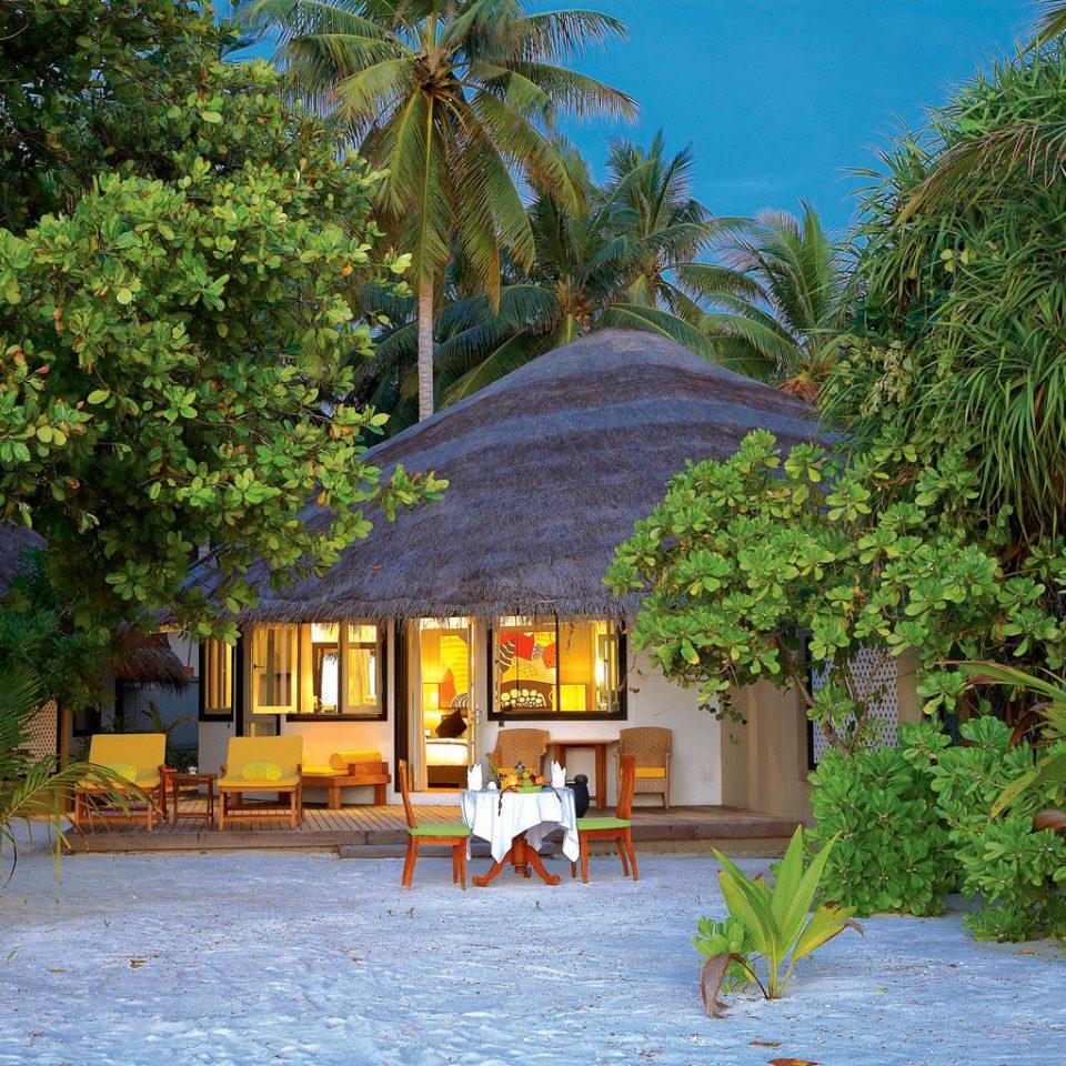 Beach Honeymoon Luxury Romance Romantic Scenic views Waterfront Wellness tree Resort house home Village Jungle Garden tropics arecales plant