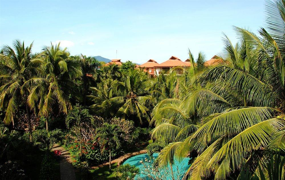 tree sky palm vegetation plant flora tropics botany arecales palm family Jungle rainforest Resort Beach Garden flower botanical garden plantation bushes