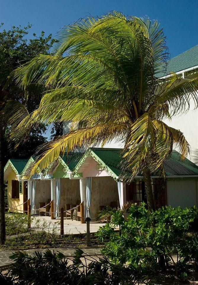 tree plant Resort arecales tropics palm palm family Beach Village Jungle hut Villa flower bushes shade Garden
