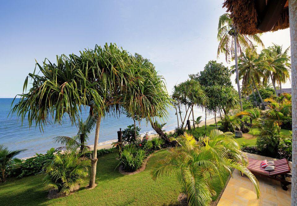 tree sky plant palm Resort botany palm family arecales tropics Beach Jungle Garden flower