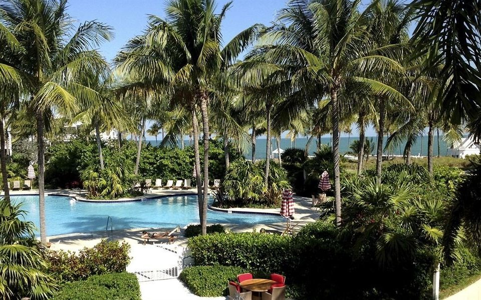 tree palm water property Resort arecales palm family lawn tropics Beach Villa Pool plant shade lined surrounded Garden