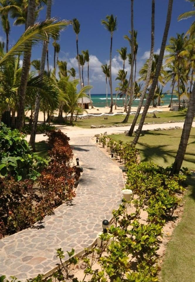 tree palm walkway botany plant arecales Resort Beach Garden lined surrounded