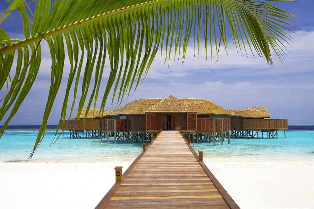 water Beach umbrella palm chair wooden Pool caribbean Ocean Resort Sea swimming pool arecales tropics Lagoon Island lined sandy shore swimming shade