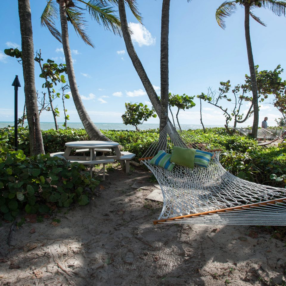 sky tree ground tropics Beach Jungle arecales palm sandy