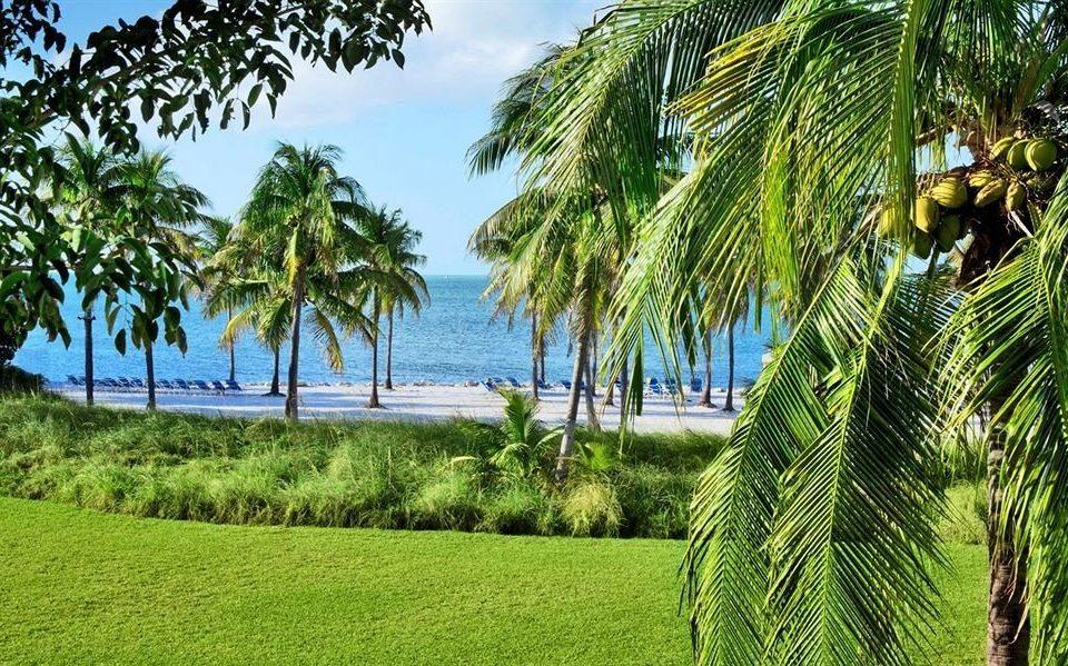 tree palm grass sky plant vegetation botany green palm family tropics Resort arecales plantation caribbean Jungle Beach agriculture lined shade