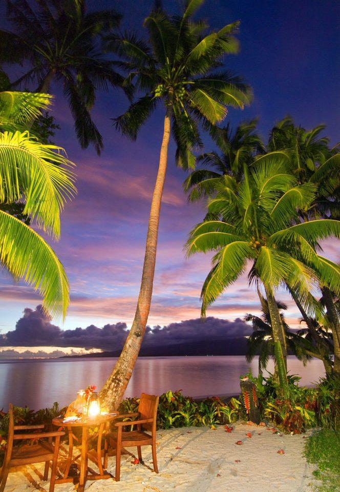 tree palm water caribbean tropics palm family Beach arecales Resort flower Jungle swimming pool plant sandy