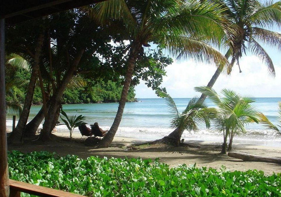 Beach Scenic views Tropical tree water palm botany Resort tropics caribbean arecales palm family shade plant Jungle sandy
