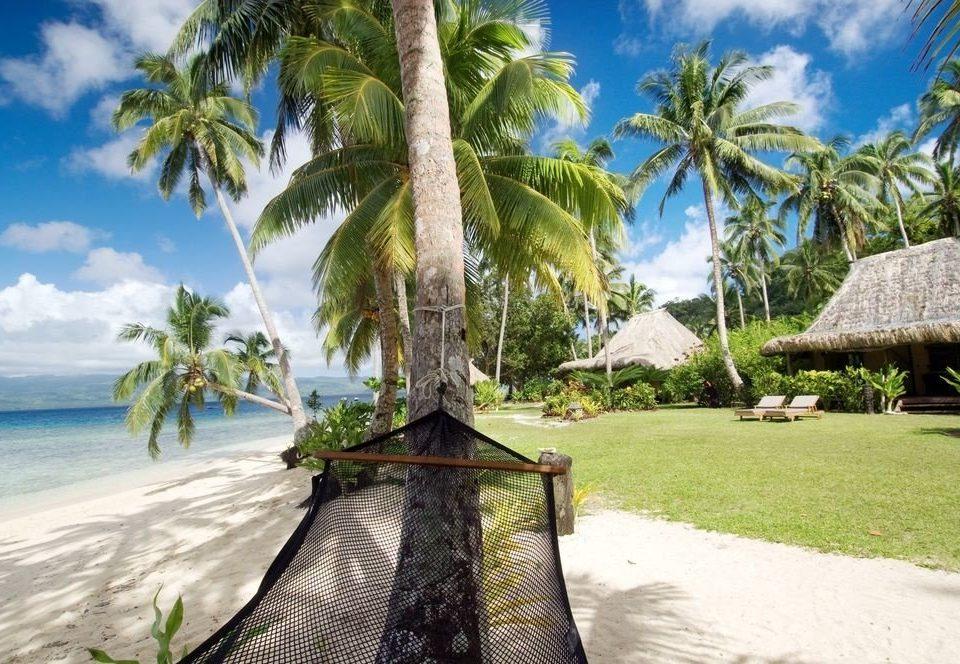 tree sky palm caribbean Resort Beach arecales tropics palm family Jungle Sea plant shore shade sandy