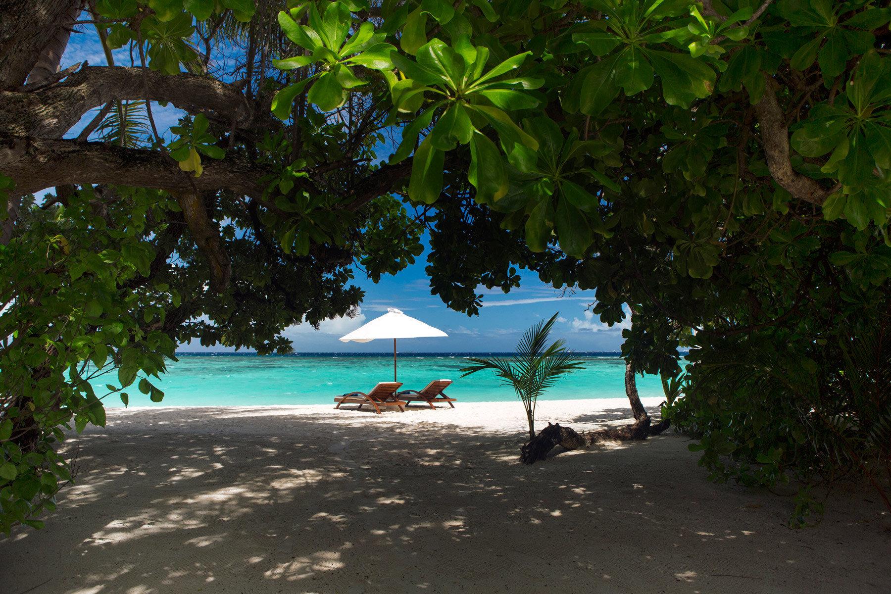 tree green Beach tropics woody plant leaf arecales sunlight Jungle Sea palm shore shade day