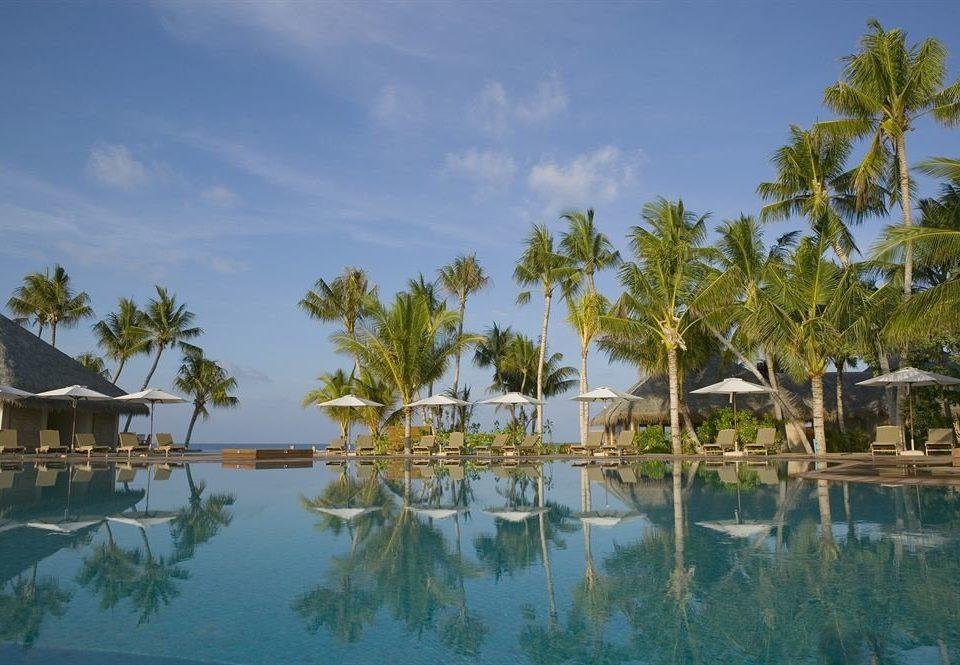 tree water sky Nature Lake Resort arecales Lagoon swimming pool caribbean Sea Beach tropics pond shore surrounded