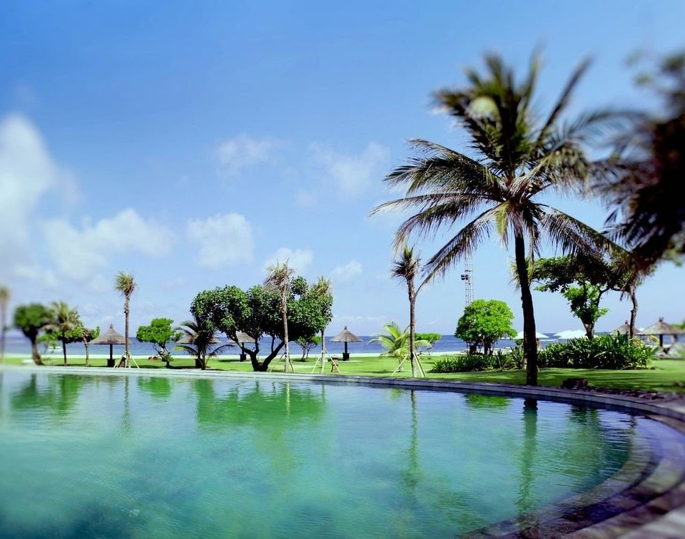 sky tree swimming pool Beach palm family arecales Resort Nature tropics Ocean Lagoon Sea caribbean palm plant shore day