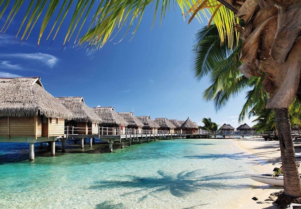 water tree swimming pool leisure Resort Pool caribbean Beach house Sea arecales Ocean Lagoon tropics palm resort town plant shore swimming