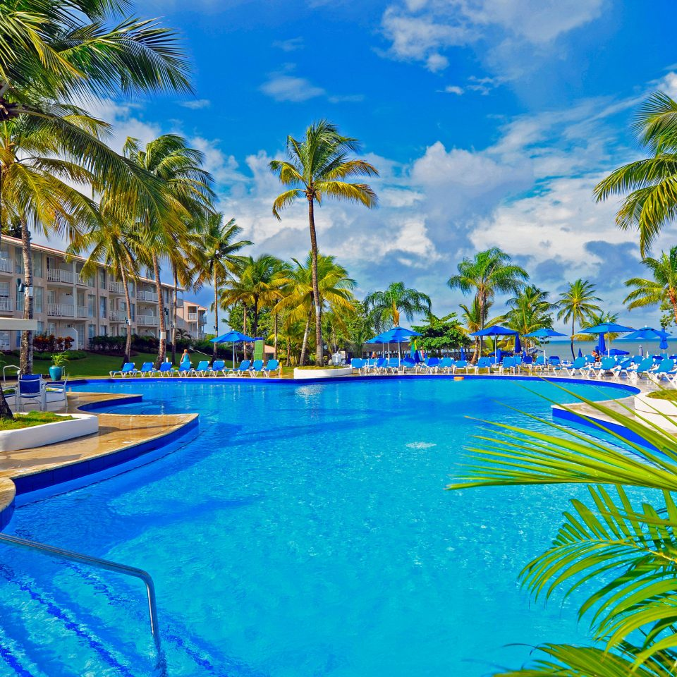 tree palm water Resort Pool Beach swimming pool leisure caribbean tropics arecales palm family plant resort town Lagoon Sea Water park lined colorful swimming