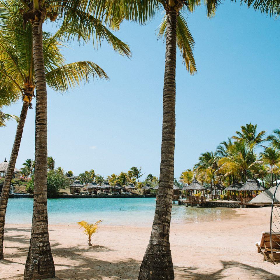 tree sky palm plant water Beach Resort palm family arecales caribbean tropics Sea Lagoon sandy