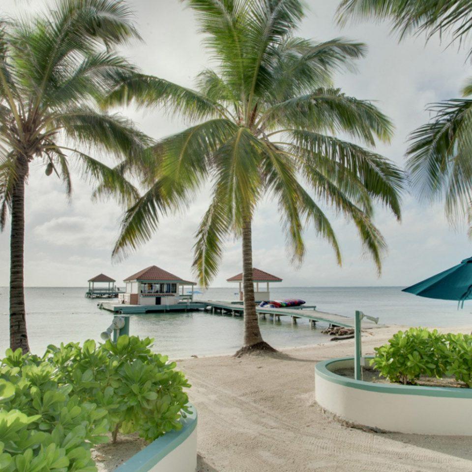 tree palm plant leisure caribbean property Resort Beach arecales tropics palm family swimming pool Villa condominium Lagoon lined sandy
