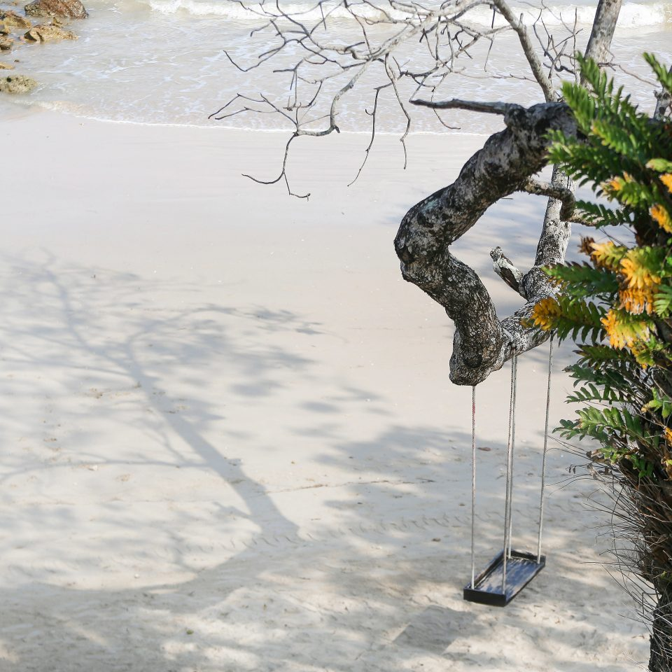 Beach Luxury Modern Resort tree Winter snow weather branch season plant woody plant leaf