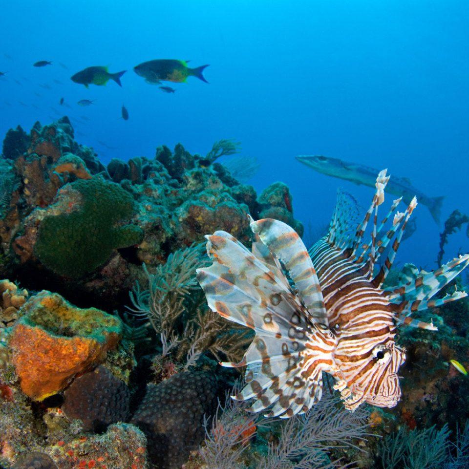 Beach Natural wonders Scenic views habitat coral reef reef coral reef fish marine biology underwater natural environment ecosystem biology Nature fish coral Ocean Sea sports diving ocean floor