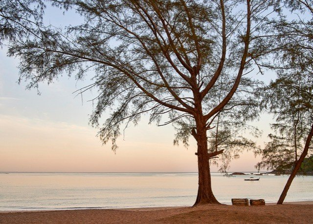 tree water atmospheric phenomenon plant horizon morning woody plant Nature Beach branch arecales landscape savanna shore wind